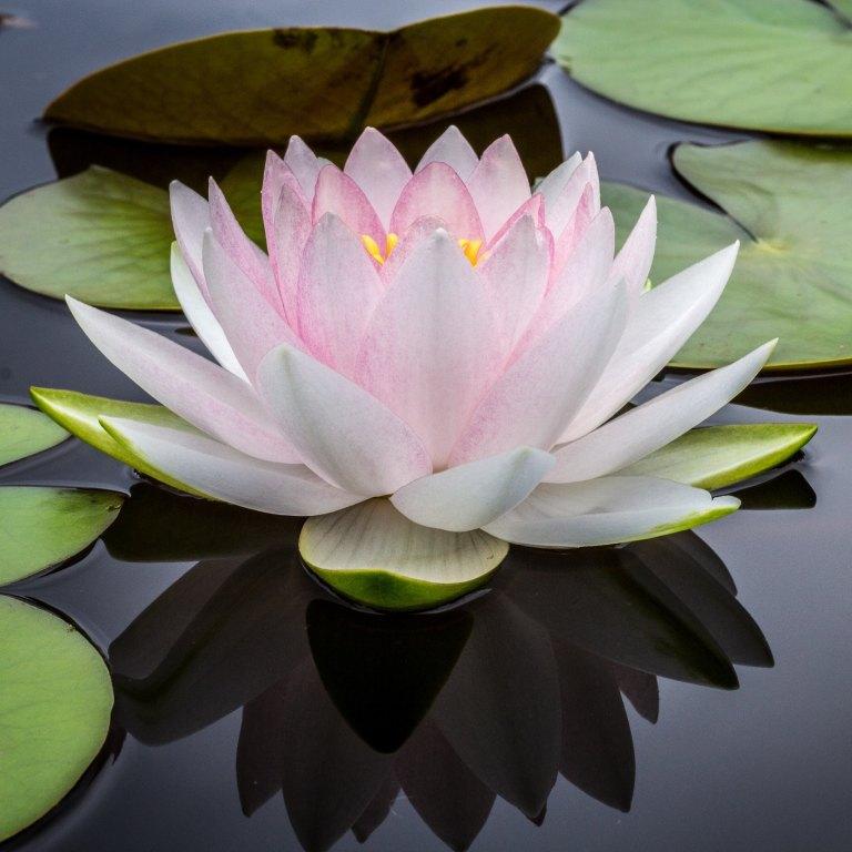 9-13-17_7 Types of Meditation