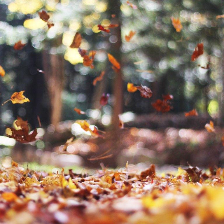 autumn-mott-15013 2