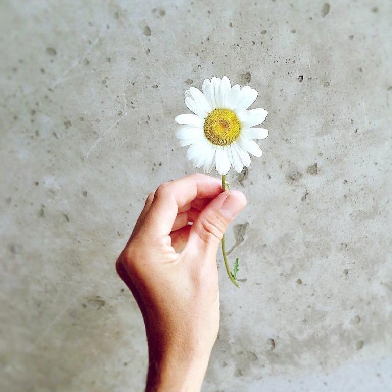 daisy-811982_1920 2.jpg
