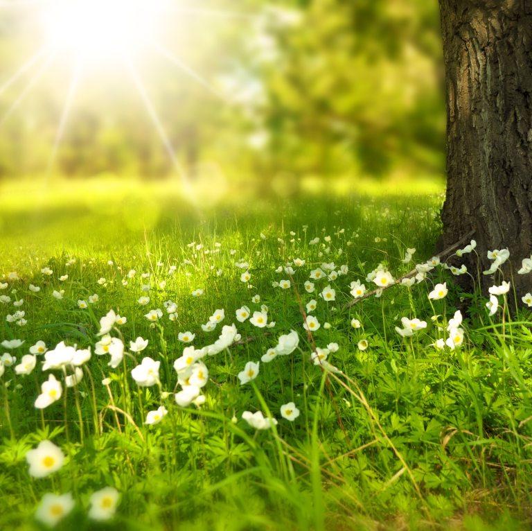 bloom-blossom-flora-60006 2